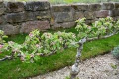 Belmonty Landgarten im Frühling